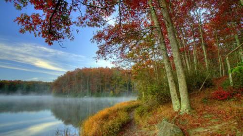Осінь картинки, осінь фото, пожовкле листя