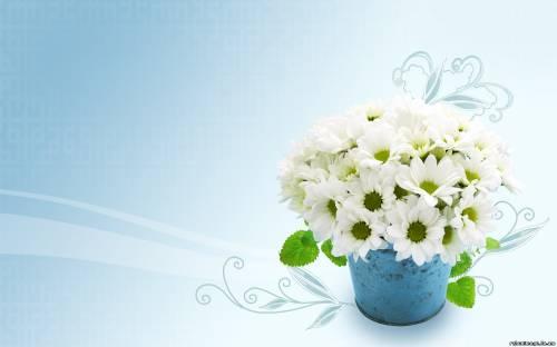 Фотоальбом цветы обои цветы в горшке